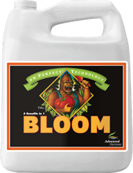 AN BLOOM PHP 4L